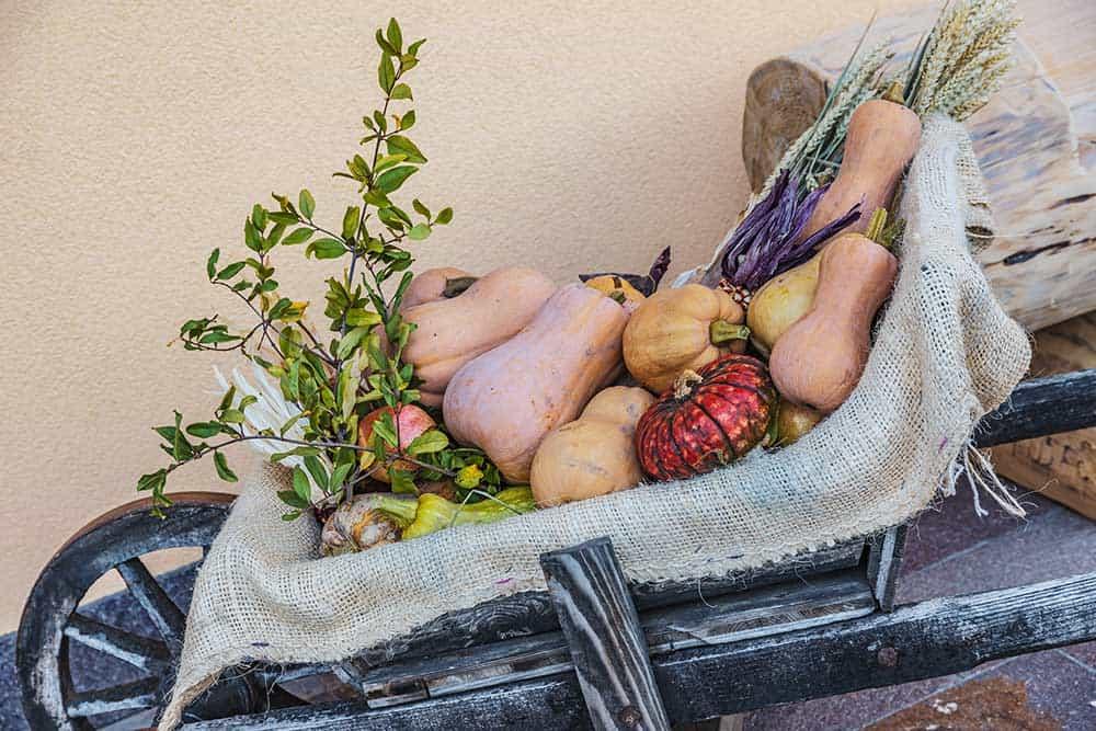 agriturismo sicher frutti e verdure orto trento